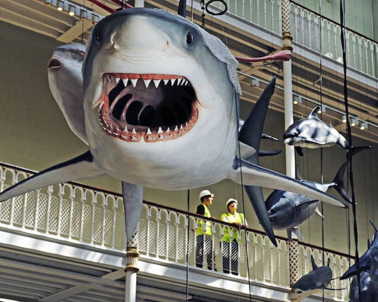National Museum of Scotland Reopening wildlife ceiling