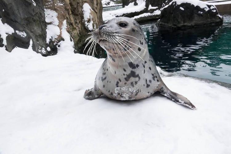 oregon zoo animals happily play  frolic   snow