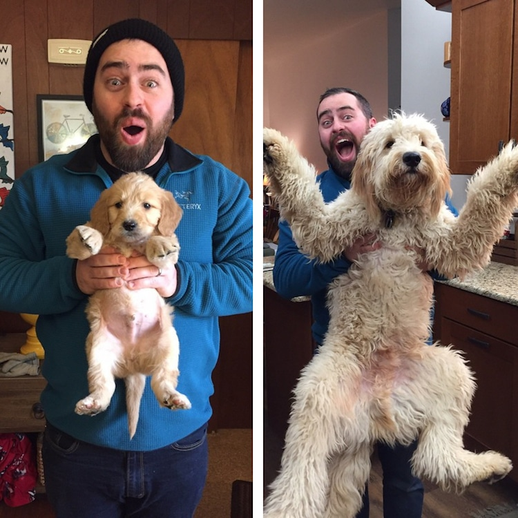 Puppy Photos Of Adorable Dogs Growing Up