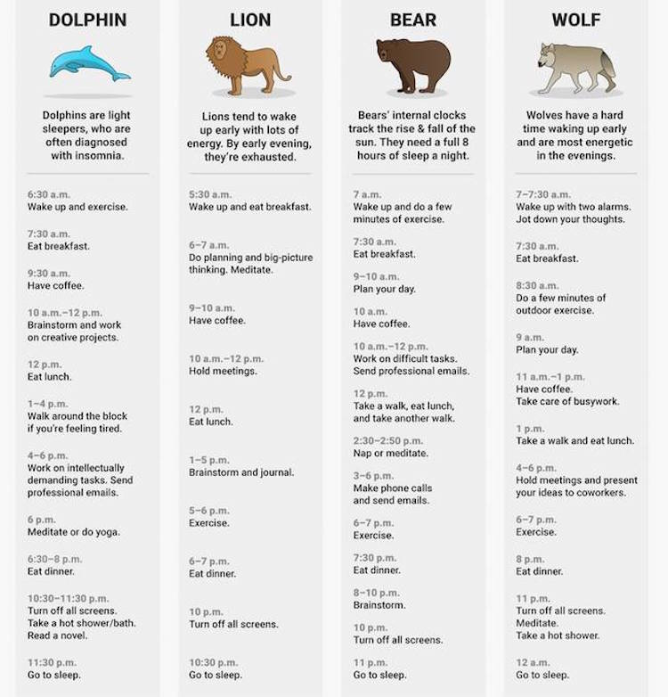 What Sleep Animal Are You?