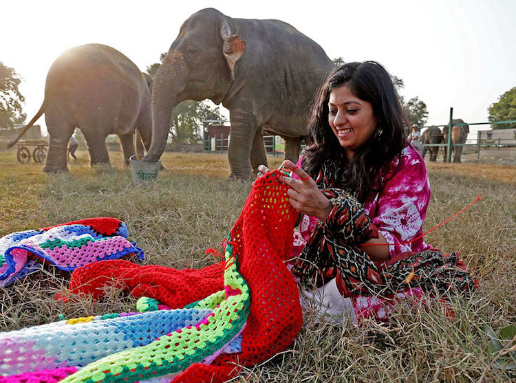 elephant sweaters wildlife SOS