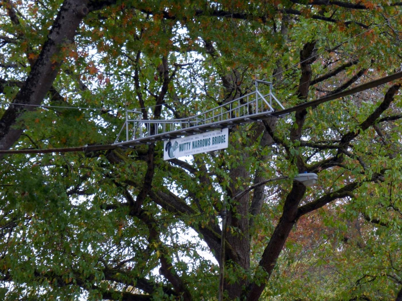 nutty narrows squirrel bridge