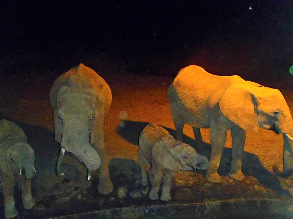 Patrick Kilonzo Mwalua Kenya drought wildlife
