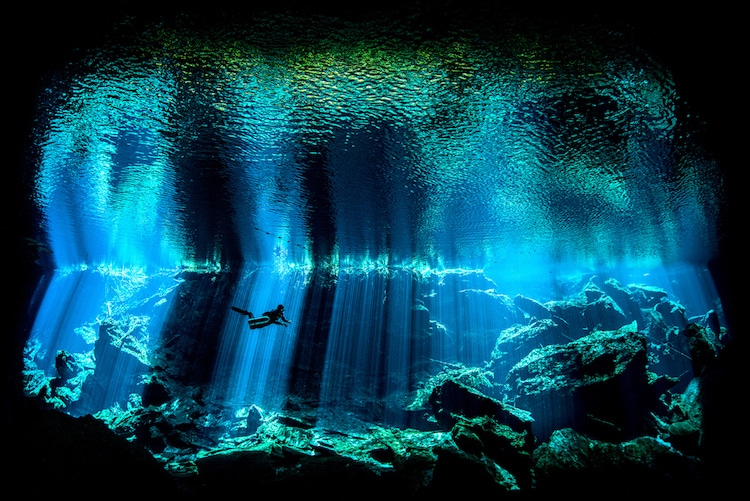 underwater photography competition