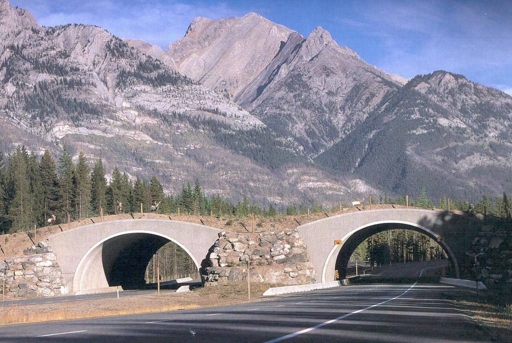 wildlife crossing animal bridge alberta