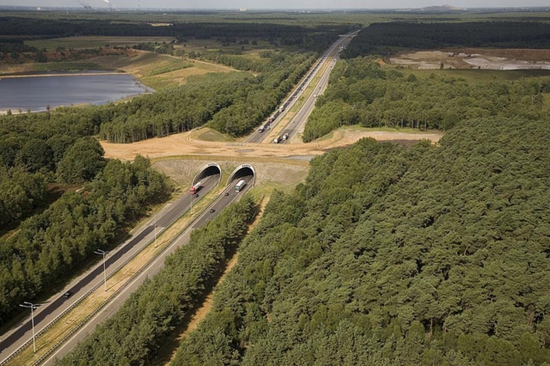 wildlife crossing ecoduct belgium