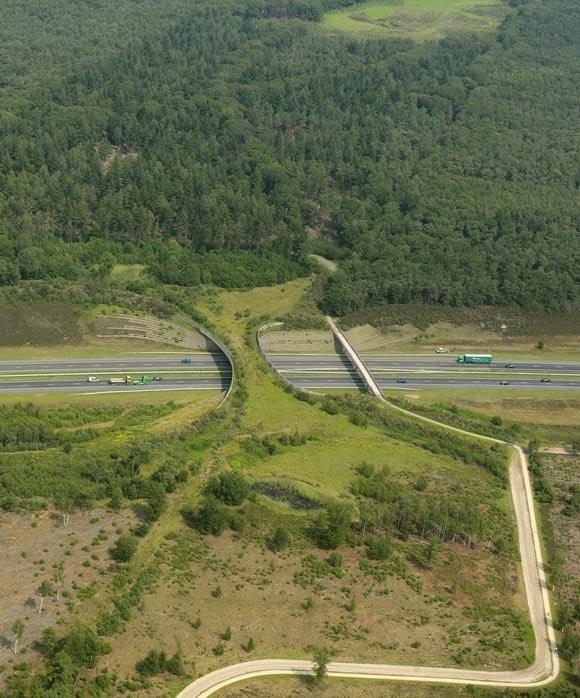 animal bridge netherlands