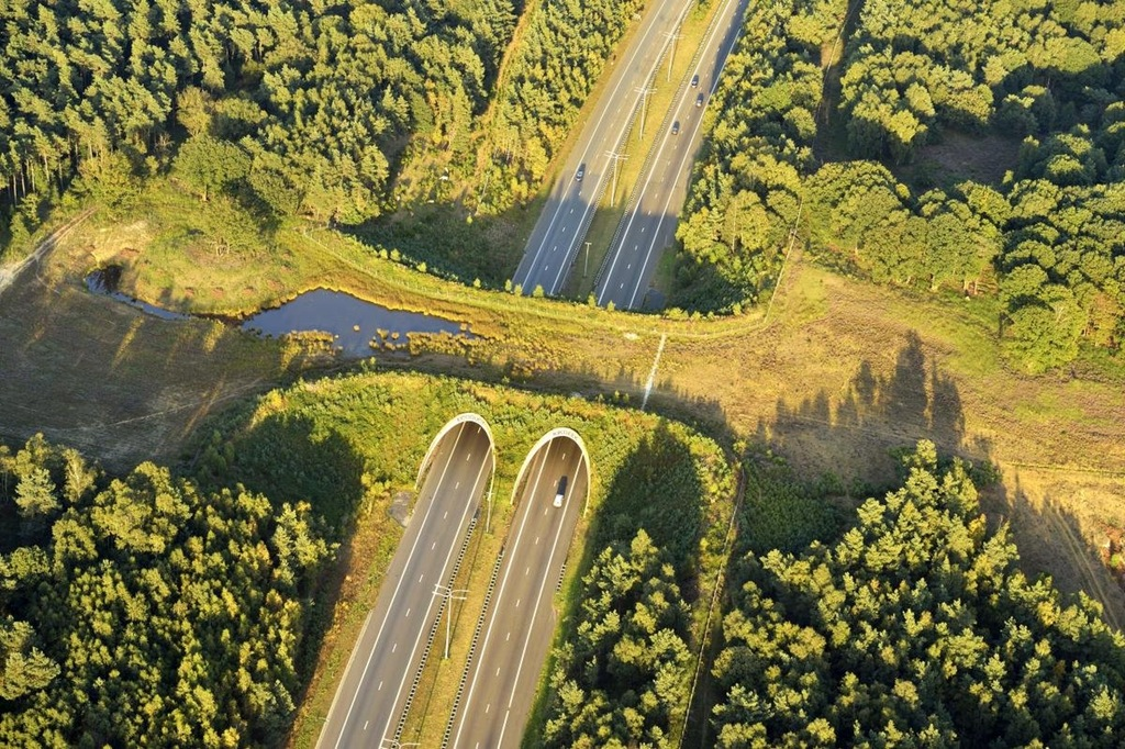 ecoduct netherlands animal conservation