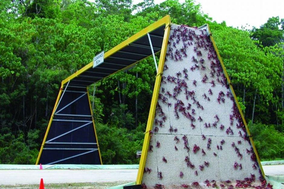 crab bridge christmas island