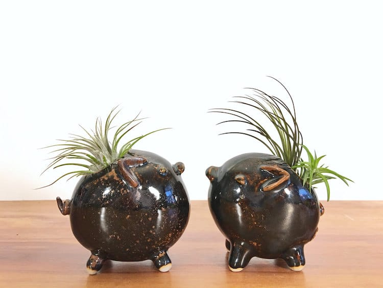 pig animal air plant vases Yoshiko Kozawa studio giverny etsy plants