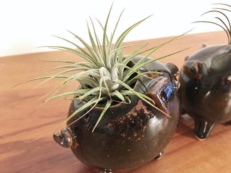 pig animal air plant vases Yoshiko Kozawa studio giverny etsy plants