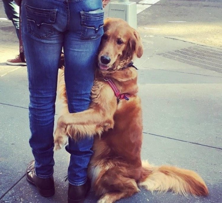 loubie hugging dog louboutina golden retriever