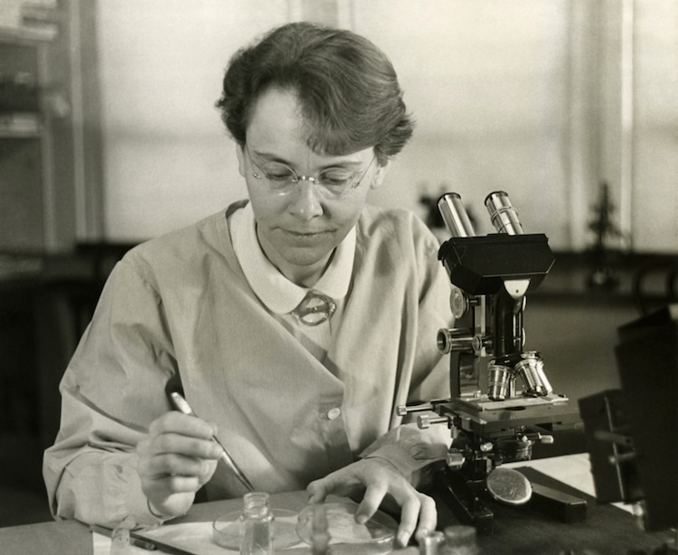 barbara mcclintock scientist