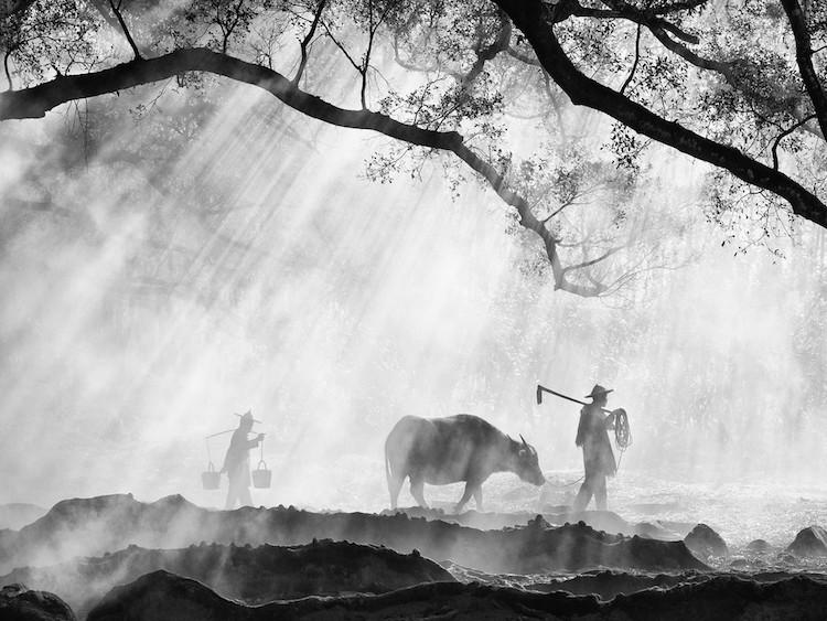 photos of farming traditions