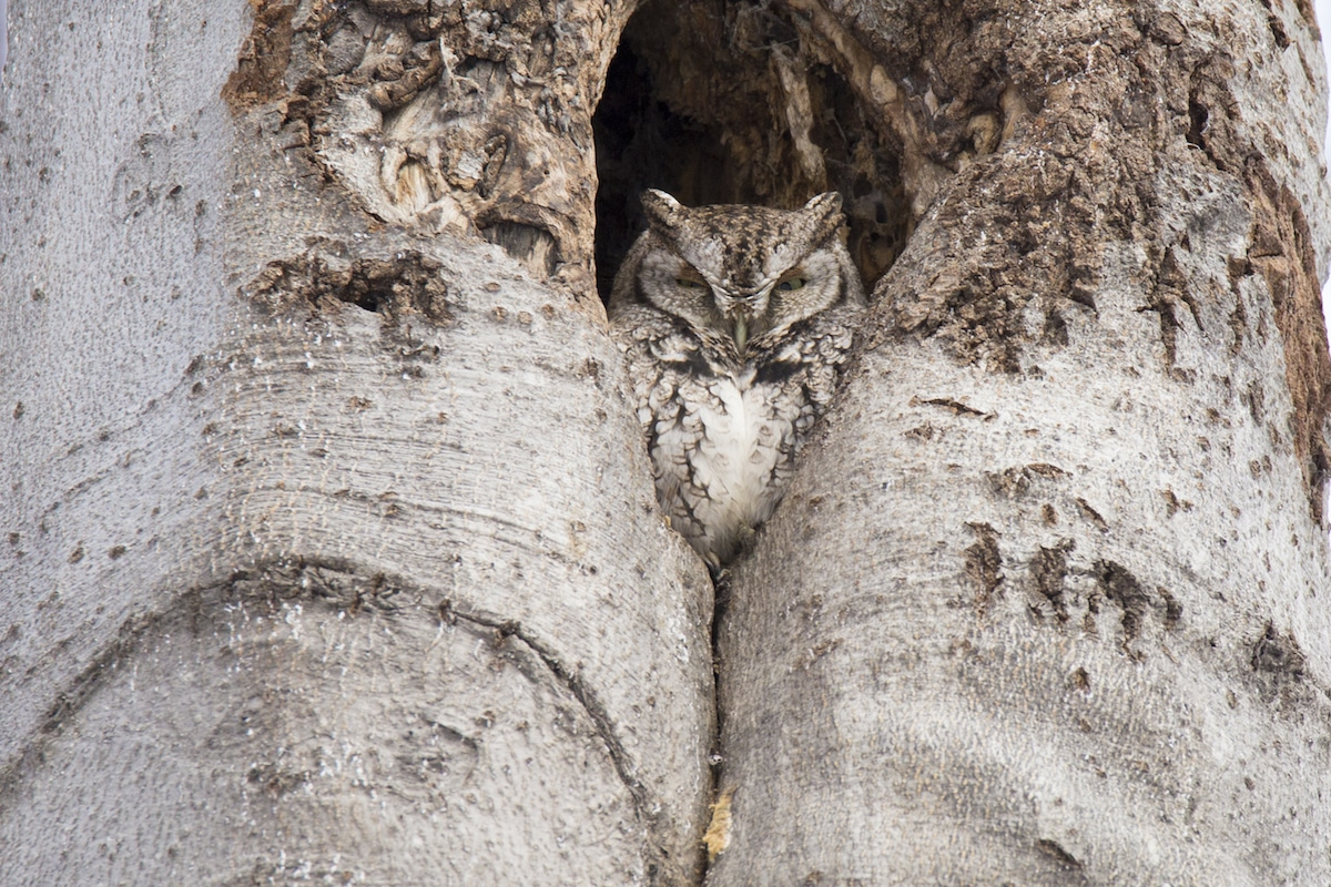 animals that use camouflage