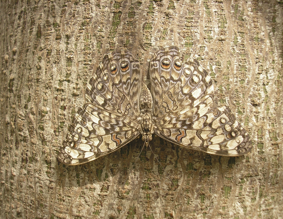 examples of camouflage