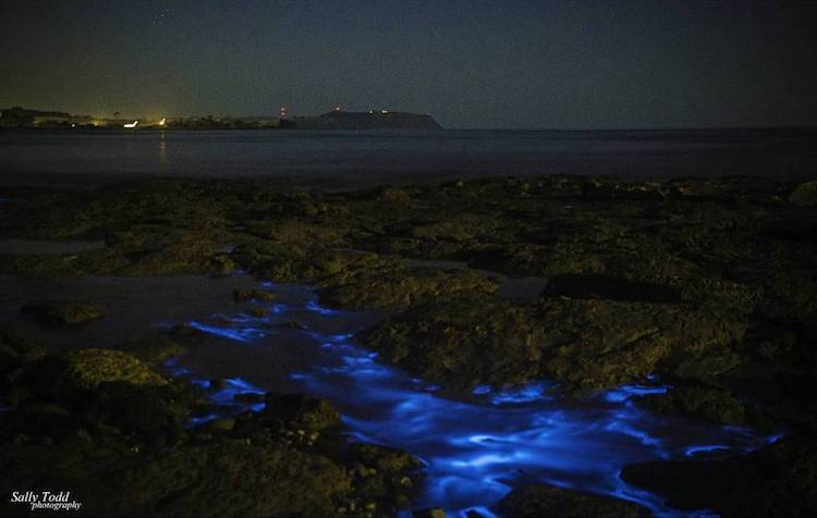 bioluminescence sea sparkles