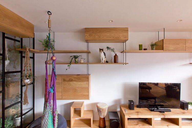 cat friendly apartment