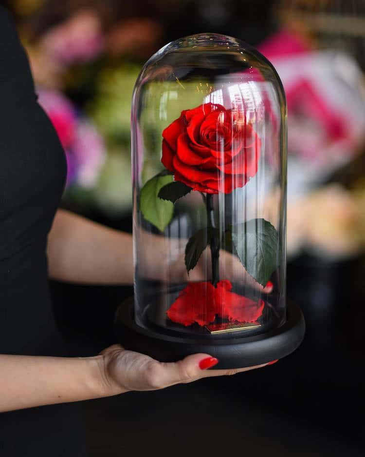 Real Enchanted Rose Lasts 3 Years Without Water Or Sunlight