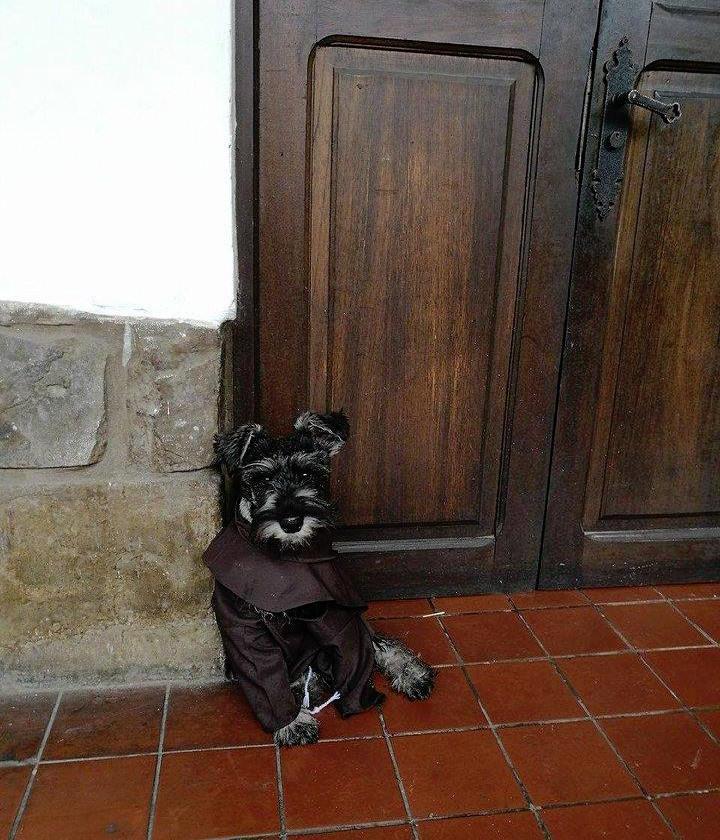 monastery dog friar dog friar bigoton cold nose project