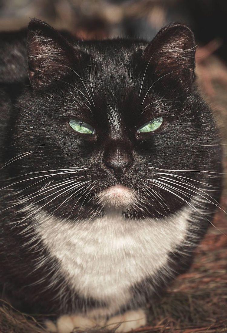 stray cat photos