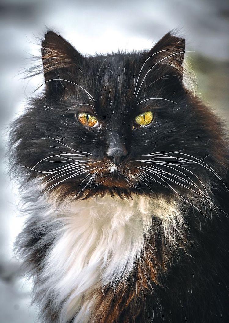 dignified cat photos