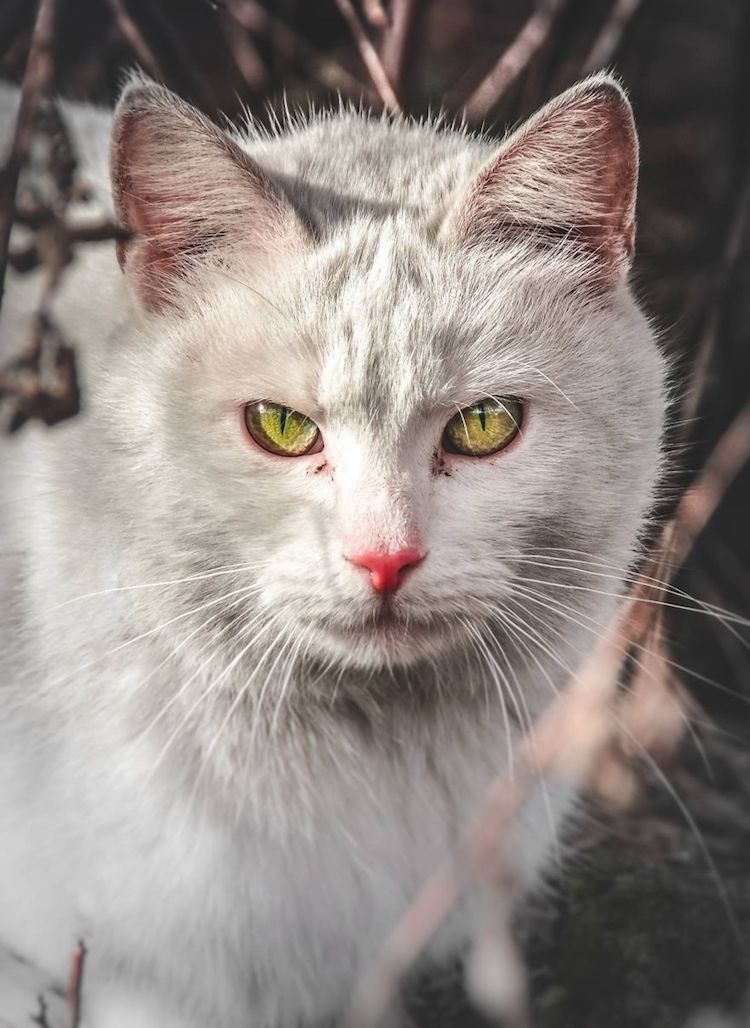 Dignified Stray Cat Photos Celebrate Their Unique Beauty