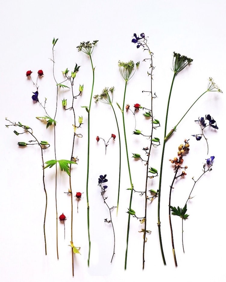 botanical arrangements flower photography ja soon kim