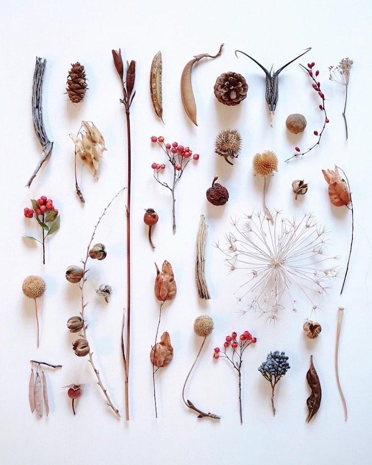 botanical arrangements flower photography ja soon kim