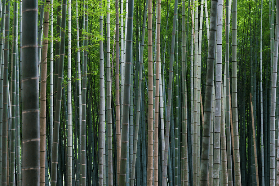leslie taylor photo of kyoto japan travel photography bamboo