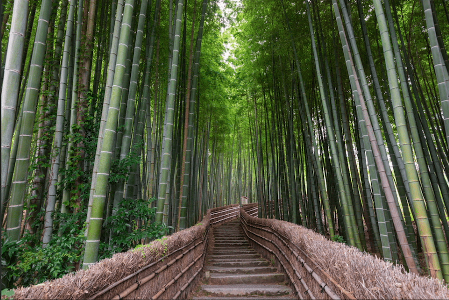 leslie taylor photo of kyoto japan travel photography bamboo path