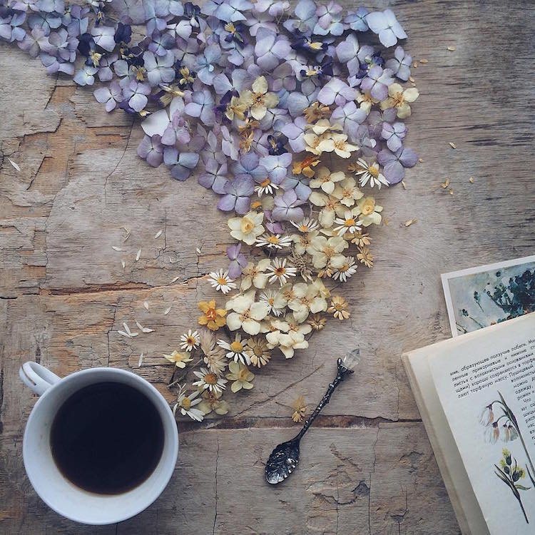 marina malinovaya floral tea story flower teacup photography