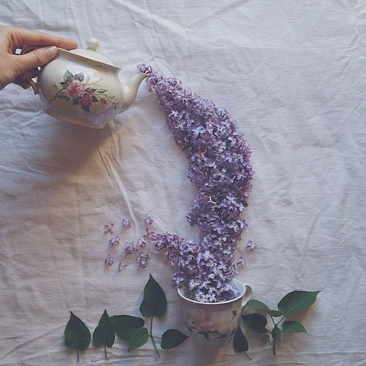 marina malinovaya floral tea story flower teacup photography teapot
