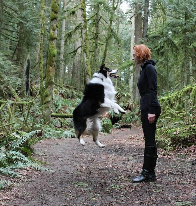 ultimate dog tricks