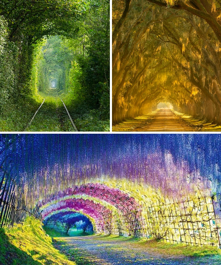 stunning nature tunnels