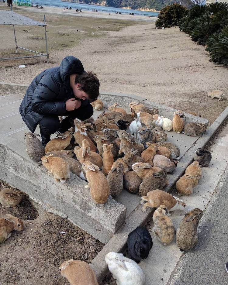 ukunoshima rabbit island japan feral bunnies rabbits