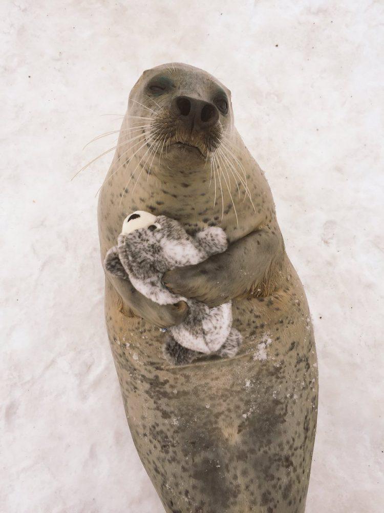 seal with stuff toy hokkaido