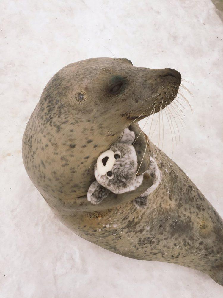 sello abrazando juguete