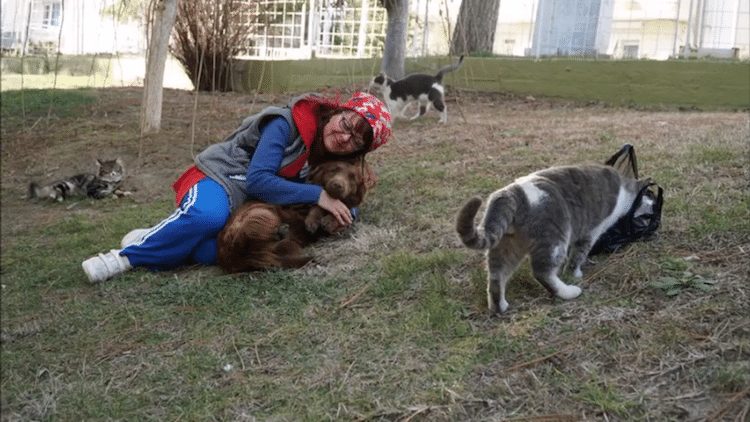 sebnem ilhan stray cat ladder strays homeless animals inspiring stories turkey winter
