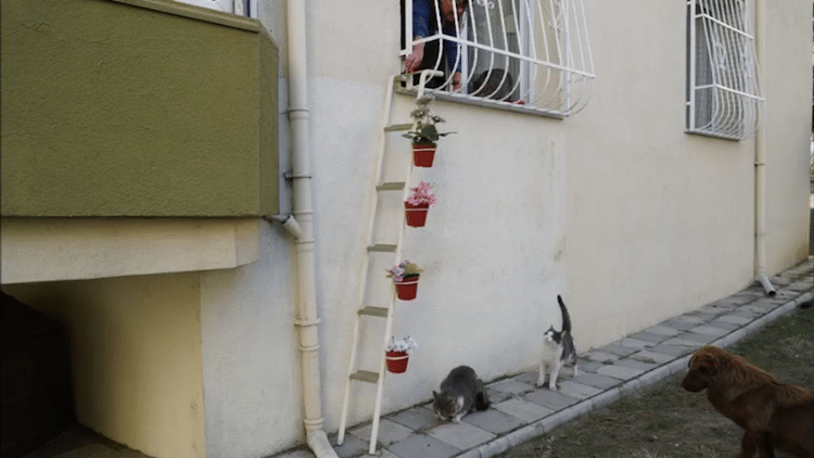Cat ladder built by compassionate woman helps strays cats for Escaleras kotas