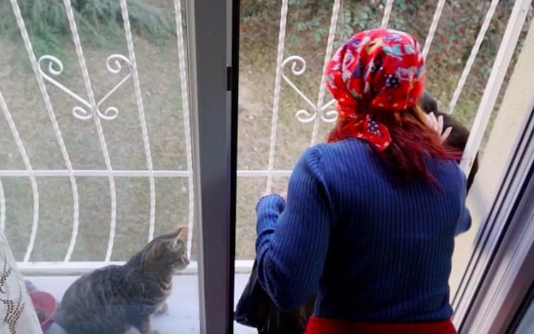 sebnem ilhan stray cat ladder strays homeless animals inspiring stories turkey winter