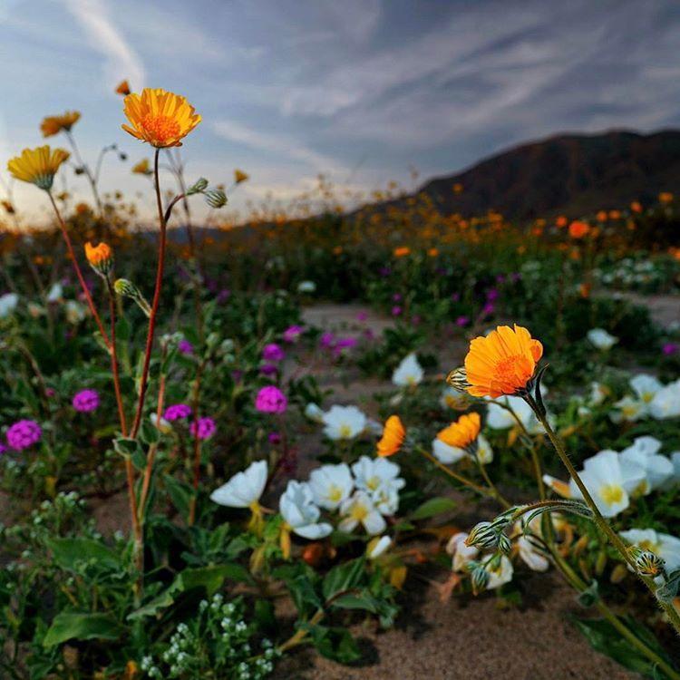 southern california super bloom