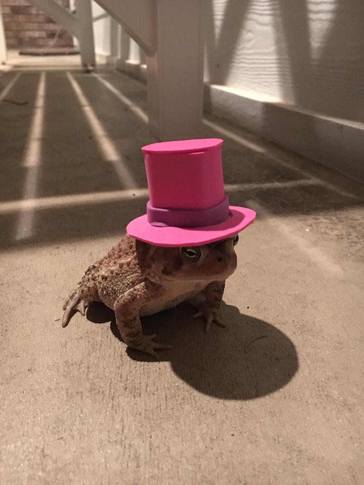 toad hat