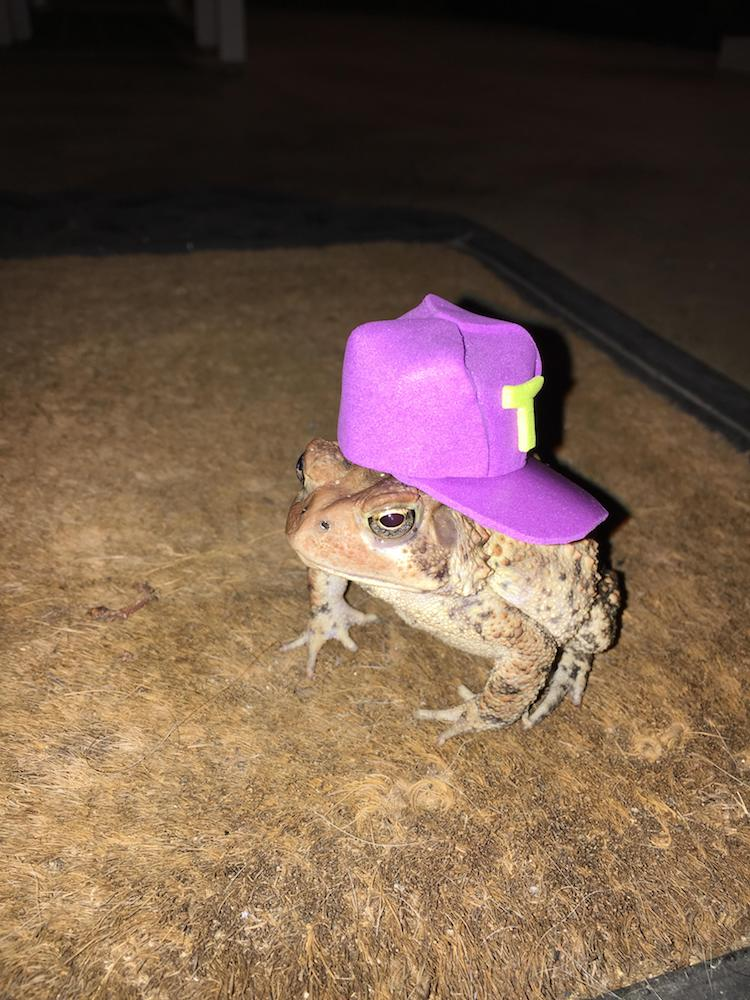 18584bbd5 Kind Man Creates Toad Hats for the Amphibian Living Under His Porch