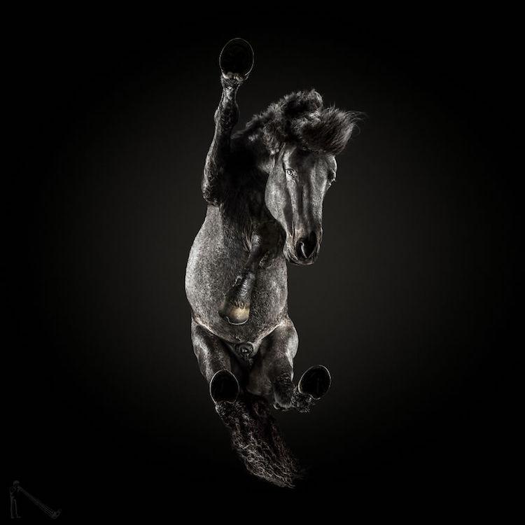 animal photography andrius burba