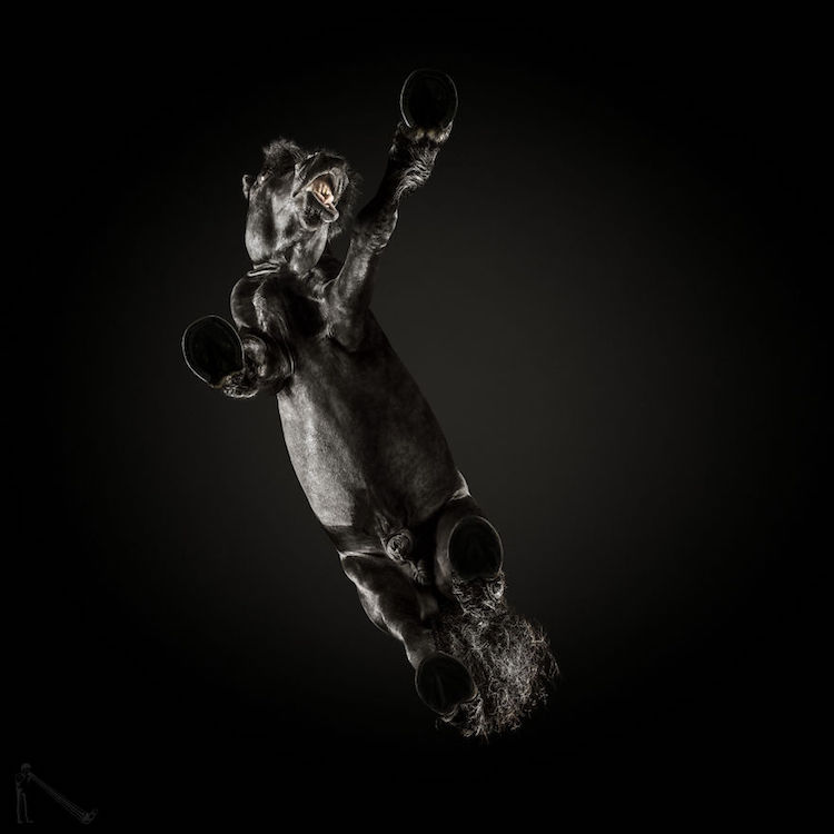 horse photo underlook