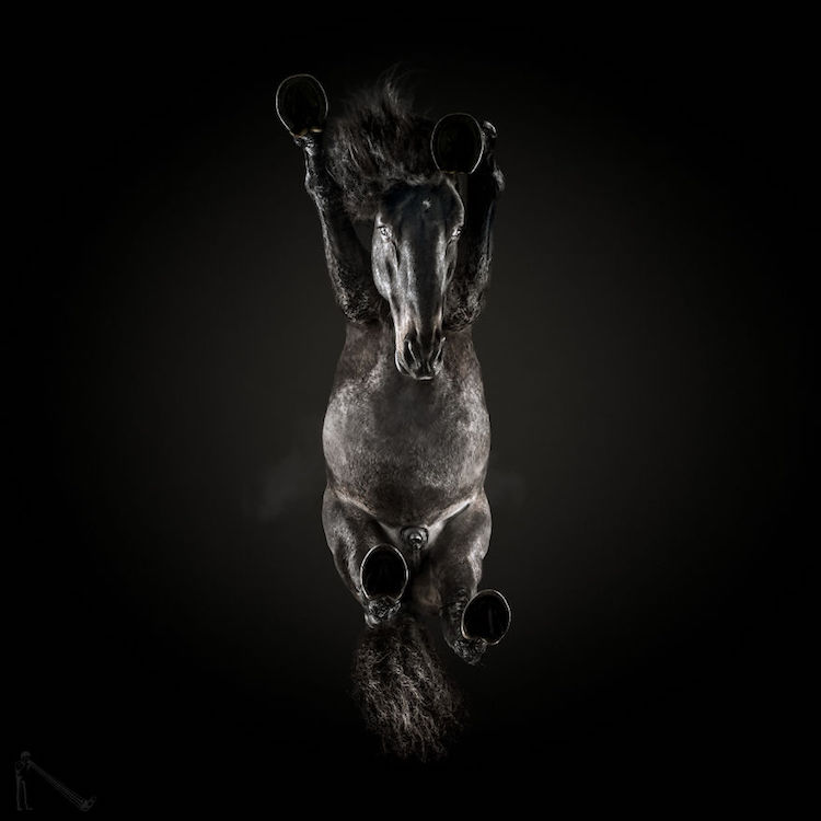 horse photo underlook