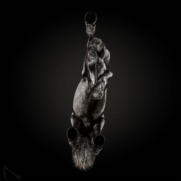 horse photography andrius burba