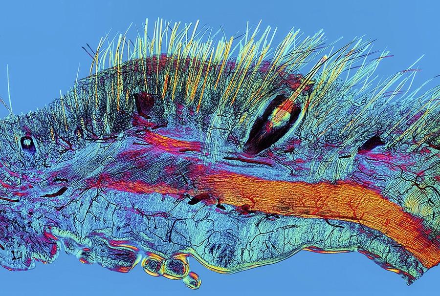 scientific photos wellcome image awards