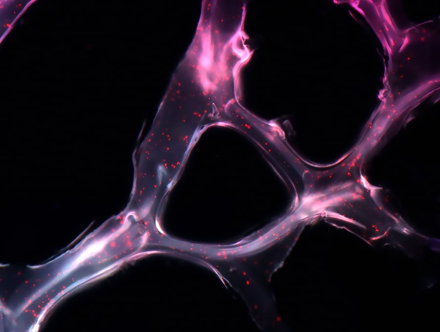 scientific photos wellcome image awards